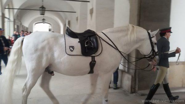 Виена Испанската школа по езда Липицанските коне Частни обиколки