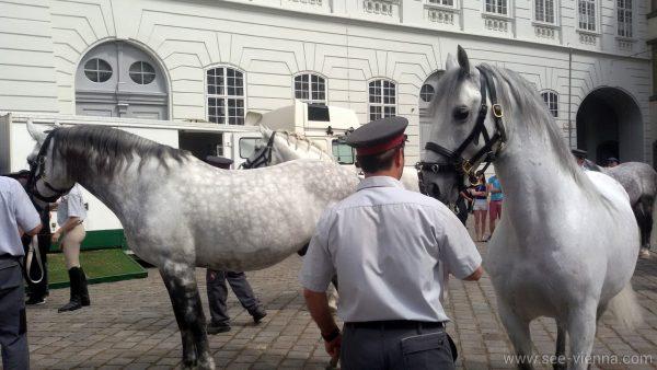 Виена Липицански коне Испанската школа по езда