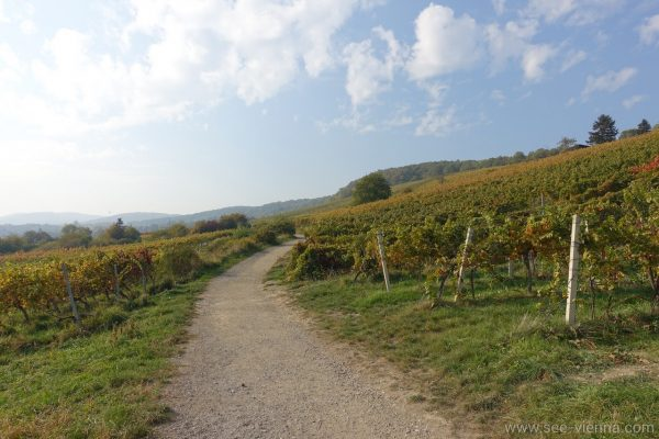 Vienna Hiking path Private Tours