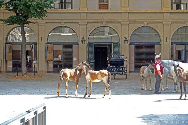 Vienna Scuderie dei cavalli Lipizzani