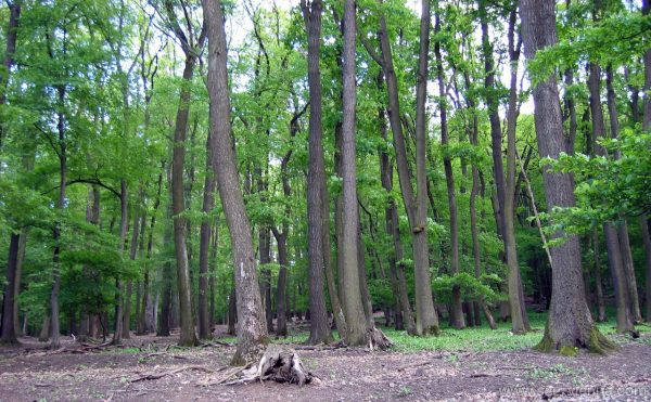 Vienna Vienna Woods Private Tours