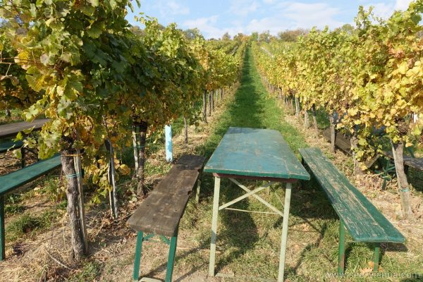 Vienna among vineyards Private Hiking Tour