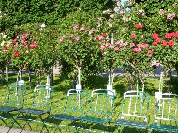 Wien Rosen in Volksgarten Private Stadtfuhrungen