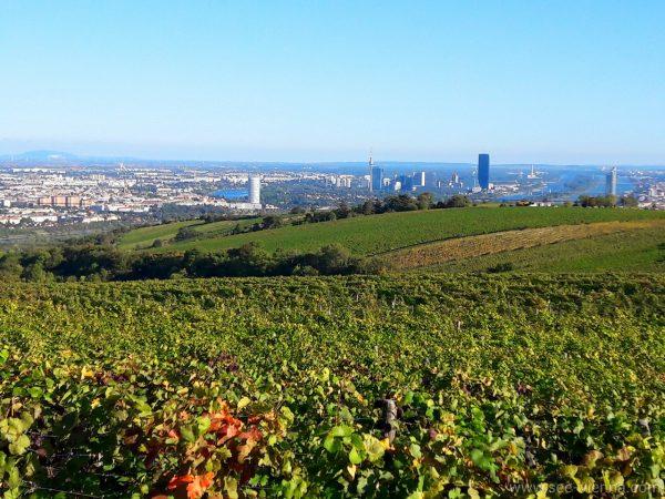Wien Wanderung Aussicht Private Stadtfuhrungen