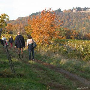 Wien Wanderung in den Weinbergen