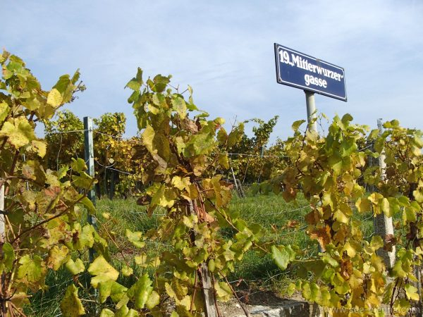 Wien Weingarten Wanderung