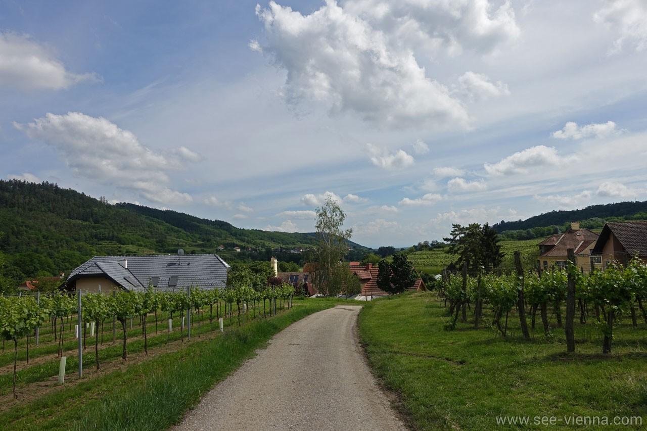 Kamptal Weintour Mollands