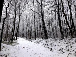 Neuwaldegg Vienna Woods
